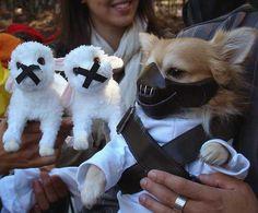 20 Tiernos perritos que lucen increíblemente bien con DISFRAZ