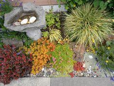Westbrook garden, Millpond Village, Astoria