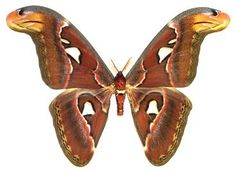 moths of memory ➵ blog