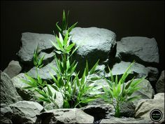 plastic aquarium plants or reptile plants: bamboo bushes from ron beck designs. parp164 by ronbeckdesigns on Etsy