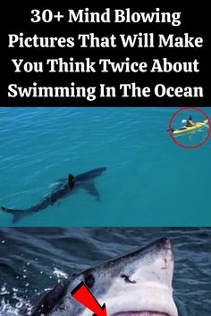 Most of the time, the sharks swim around the cage calmly as divers observe the magnificent fish. On rare occasions, something can aggravate the shark, causing them to bite the cage or swim into it. In this situation, the shark got stuck in the cage, which is why it is thrashing around.