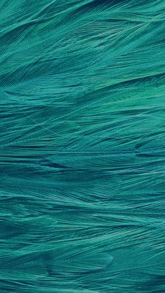 papers.co-vf29-feather-blue-bird-pattern-34-iphone6-plus-wallpaper.jpg 1,242×2,208 pixels