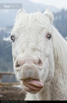 Whacky Horse by Andrea Izzotti Funny Horse Face, Funny Animal Faces, Funny Horses, Funny Faces, Funny Animals, Cute Animals, Farm Animals, Funny Horse Pictures, Funny Animal Photos