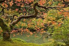 Resultado de imagen para fotomurales de jardines