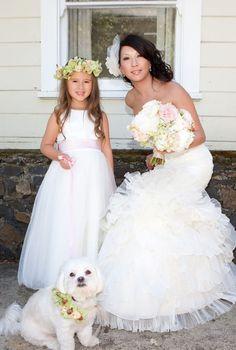 wedding dog!