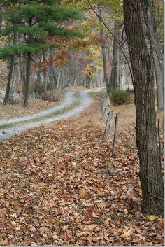 Autumn road.                                                                                                                                                     More