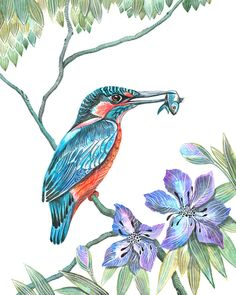 Kingfisher bird // SALE 1+1// Buy one get one FREE, wild life watercolor art print, size 8x10. (No. 9) by TevaKiwi on Etsy https://www.etsy.com/listing/91178854/kingfisher-bird-sale-11-buy-one-get-one