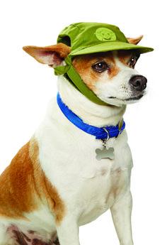 STAR WARS ™ Yoda ™ Dog Hat