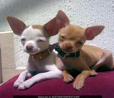 What cute little buddies :)