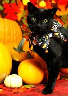 Kittens Cutest, Cats And Kittens, Cute Cats, Baby Kittens, Kitty Cats, Baby Animals, Cute Animals, Fall Cats, Kitten Photos