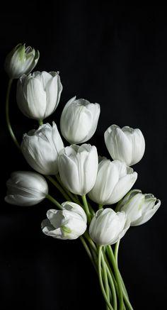 Tulipani ; dichiarazione d'amore.