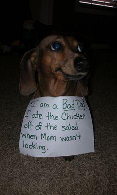 Dat heeft mijn hondje ook al eens gedaan