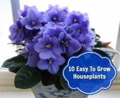 Top 10 Easy To Grow, Kid and Pet Friendly Houseplants. http://momalwaysfindsout.com/2012/04/top-10-easy-to-grow-kid-and-pet-friendly-houseplants/