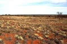 The real Australia - miles and miles of flat arid land