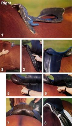 Saddle fit tips - EVERY RIDER SHOULD KNOW - they should still have a master saddle fitter check the saddle, but check it before you ride to prevent injuries! horses are always changing muscle tone, just like humans.