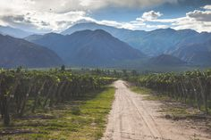 A Guide to Argentina's Wine Regions