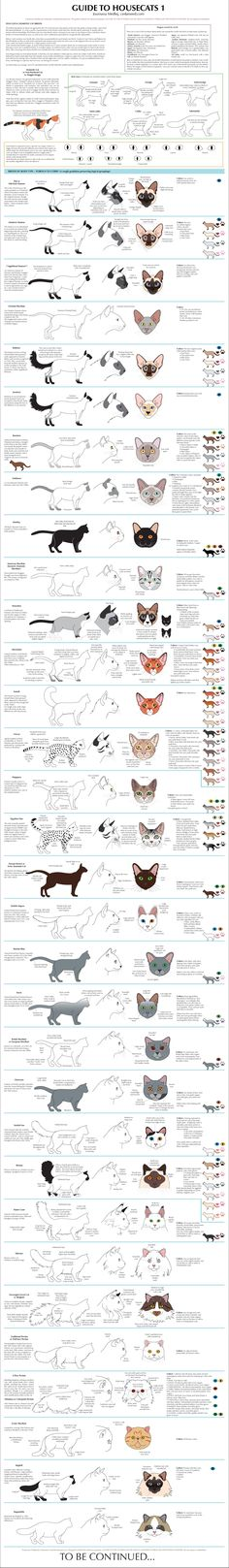 Cat breeds. Interesting, and I will still save feral cats first. I love Persian cats but I won't buy one as they have been completely disfigured and no longer look like a Persian cat; by greedy bored people looking to make a name for themselves with ridiculous standards. The Neblung ( spelling?), Main coon. Many variations of them are running around in nature and I love them all #CatBreeds