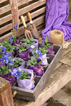 Tissue paper wrapped pots tied with string & colour coordinated with flowers ... could make with herbs or edibles & give as gifts. Too easy. | The Micro Gardener