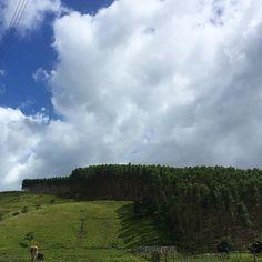 Foto: IPhone 6s Plus #foto #fotografia #photo #photography #details #detalhes #natureza #sky #ceu #maceio #alagoas #nordeste #brasil #brazil #mobilephotography #iphone #iphone6splus #apple #vsco #vscobrasil