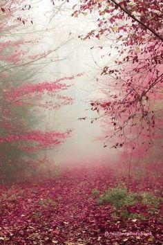 Autumn pinks