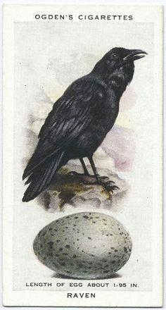 Ogden's Cigarettes, Raven