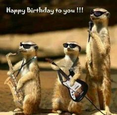 Gefeliciteerd - Happy Birthday Funny - Funny Birthday meme - - Gefeliciteerd More The post Gefeliciteerd appeared first on Gag Dad. Happy Birthday Pictures, Happy Birthday Funny, Happy Birthday Quotes, Happy Birthday Greetings, Birthday Memes, Funny Happy Birthdays, Funny Animal Photos, Funny Animals, Funny Pictures