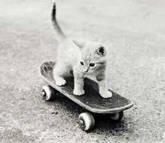 #Cats  #Cat  #Kittens  #Kitten  #Kitty  #Pets  #Pet  #Meow  #Moe  #CuteCats  #CuteCat #CuteKittens #CuteKitten #MeowMoe      Skater kitty ...   http://www.meowmoe.com/91421/