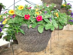 We offer a variety of sizes and styles to meet individual needs and desires. We also offer boxes of bedding plants of seasonal favorites in large quantities. Some favorites include Geraniums, Marigolds, and many more. Hanging Baskets, Geraniums, Lush, Photo Galleries, Bedding, Boxes, Meet, Plants, Beautiful