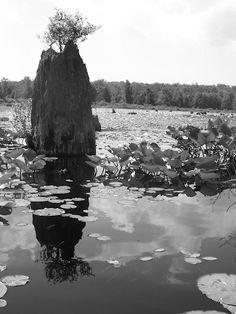 Black Moshannon Lake in Pennsylvania.
