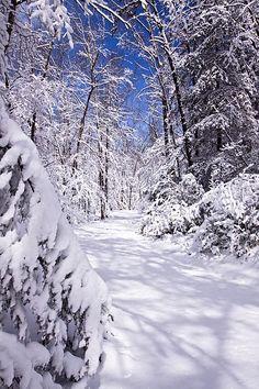 Winter wonderland - fresh snow ..No Footprints.    Photo by Rob Travis