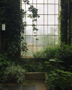 Natur im Innenraum // Fotografie von Haarkon / India & Magnus ( Dark Green Aesthetic, Plant Aesthetic, Nature Aesthetic, Aesthetic Grunge, Aesthetic Vintage, Slytherin Aesthetic, Aesthetic Pictures, Botanical Gardens, Aesthetic Wallpapers