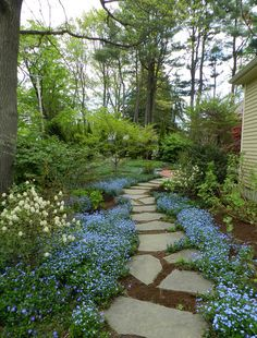by Walker Creek Garden Design Forget-me-nots are hardy, unfussy plants. Use them in clumps to line walkways and paths.