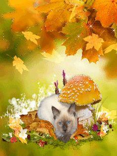 Котик под грибочком - анимация на телефон №1270714