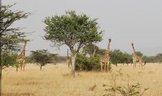 Kenya Safari Tour   African Safaris   Natural Habitat Adventures-World Wildlife Federation