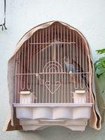 About Parakeet Bird Cages