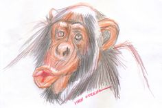 chimpancé en lapices de colores
