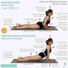 yoga cobra vs upward-facing dog - Google Search