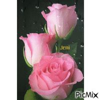 Water drops Water Drops, Roses, Flowers, Pink, Rose, Royal Icing Flowers, Flower, Florals, Bloemen