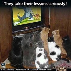 Lg belajar cara melawan tikus