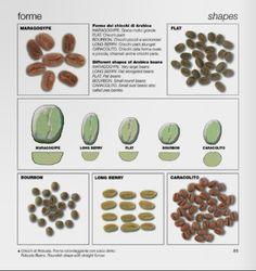 La filiera del caffè espresso/The espresso coffee production system (BOOK) by Bazzara s.r.l. - issuu