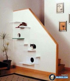 My husband totally wants to do something like this on our staircase! A pensar nos melhores amigos <3