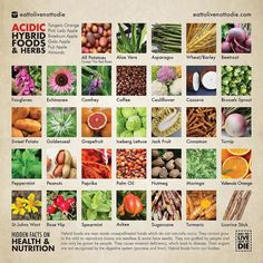 These are just a few hybrid foods & herbs that were already on the planet before you were born. So it is not your fault that you thought they were natural. All Hybrid foods are acidic. They will slowly destroy the mucus membrane (your body) from the inside out. Your body is too powerful for food to harm you IMMEDIATELY but over a long period of time it will INDEFINITELY threaten your life. If you have been eating any of these hybrid foods there is no need to be scared. All you have to do is…