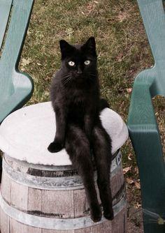 """Anthropomorphic"" cat in human sitting pose, lol!"