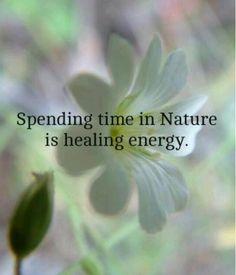 Spending time in Nature --- is healing energy : I just completed a reiki healing course and found it really strengthened my ideas of the relation between nature and its effect on energy work Citation Nature, Garden Quotes, Nature Quotes, Forest Quotes, Earth Quotes, Yoga, Natural Healing, Natural Oils, Healing Oils