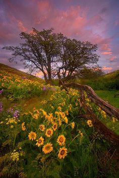 Field of flowers and sunset. Isn't the world beautiful?