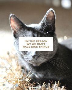 Oh Cats! via @ezpudewa