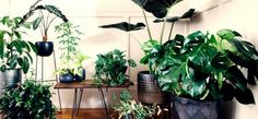 The stars of the room potted plants, indoor plants, sunset, decoration, gar Indoor Plant Wall, Indoor Plants Low Light, Best Indoor Plants, Lipstick Plant, Decoration Plante, Plant Design, Potted Plants, Foliage Plants, Houseplants