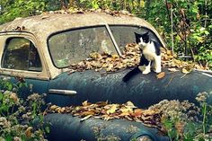 """""""Yeah, it needs some work but it's a real fixer-upper opportunity.  Once I get it running then I just need thumbs.  Haven't...quite worked that bit out yet."""""""
