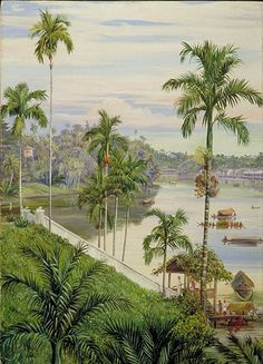 Marianne North Gallery: Painting View down the river at Sarawak, Borneo Plant Illustration, Botanical Illustration, Botanical Prints, Marianne North, British Colonial Style, Borneo, Unique Art, Landscape Paintings, Illustrations