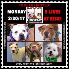 TO BE DESTROYED 02/20/17 - - Info   To rescue a Death Row Dog, Please read this:http://information.urgentpodr.org/adoption-info-and-list-of-rescues/  To view the full album, please click here:http://nycdogs.urgentpodr.org/tbd-dogs-page/ -  Click for info & Current Status: http://nycdogs.urgentpodr.org/to-be-destroyed-4915/
